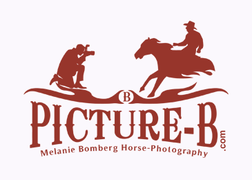 Logo Design Picture B Horse Photgraphy